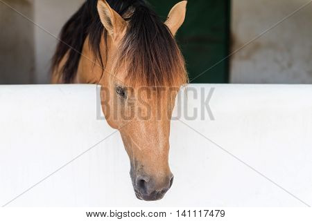 Brown Horse Portrait Inside The Shelter