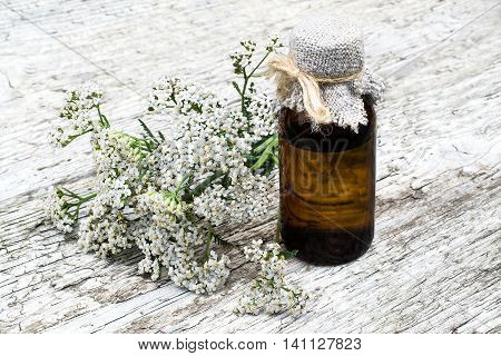 Medicinal plant yarrow (achillea millefolium) and pharmaceutical bottle on old wooden table. Yarrow - a popular means of treatment in herbal medicine has anti-inflammatory and antiseptic properties