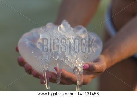 Big white jellyfish medusa in woman's hands.