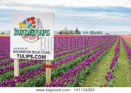 Mount Vernon, USA - April 6, 2016: Roozengarde sign at the Skagit Tulip Festival with purple and red fields in Washington state