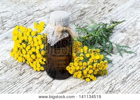 Medicinal plant tansy (Tanacetum vulgare) and pharmaceutical bottle on old wooden table. It is used in herbal medicine pharmaceutical food and chemical industry