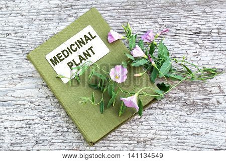 Medicinal plant field bindweed (Convolvulus arvensis) and herbalist handbook on old wooden table. Used in herbal medicine honey plant