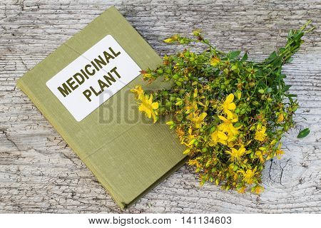 Medicinal plant St. John's wort (Hypericum) and herbalist handbook on old wooden table. Actively used in herbal medicine excellent bee plant