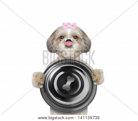 Cute dog wants to eat and hold a bowl -- isolated on white