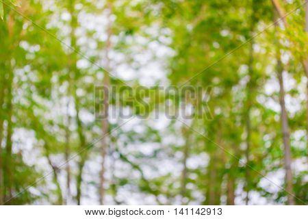 Abstract Natural Color Background. Natural Bokeh