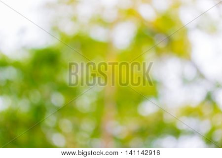 Abstract Natural Color Background. Natural Bokeh