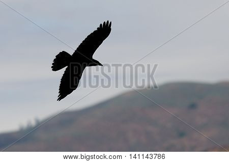 Silhouette of a Common Raven Flying Over the Countryside