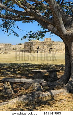 Monte Alban pyramids behind green tree in Oaxaca