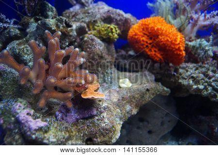 Different algae and rocks in an aquarium