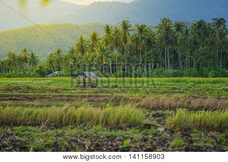 evening time hut in farmland of people beside mountain in countryside Thailand