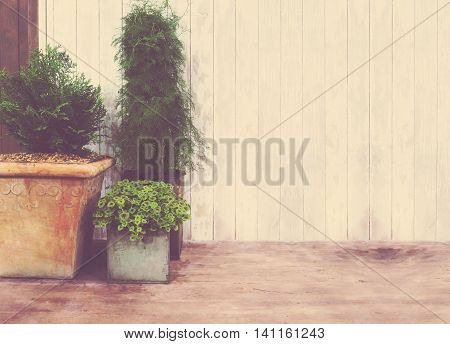 Small plants in flowerpot over wood background vintage filter effect.