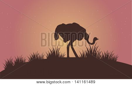 Silhouette of Ostrich in the fields vector art