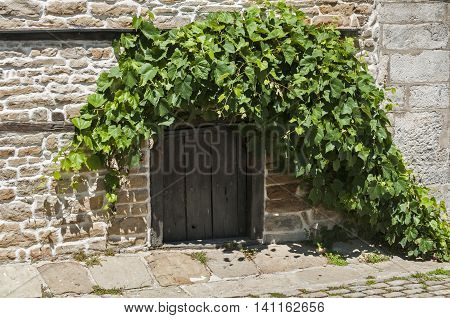 Small wooden door of basement in old stone farmhouse with vine around it