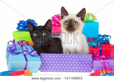 Black kitten with yellow eyes next to siamese kitten with blue eyes in purple polka dot birthday present box ribbons and bows on presents around them isolated on a white background looking at viewer.