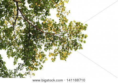 Tree isolated on white background with clipping path.
