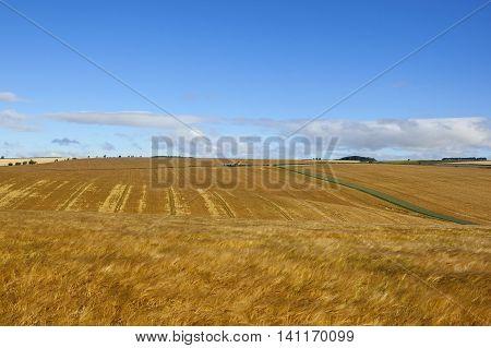 Extensive Golden Barley Crops