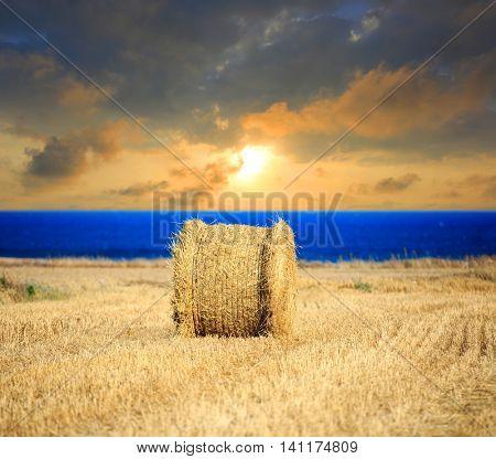 evening sunset scene with hay roll on farming field near sea
