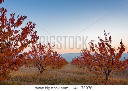 Autumn trees with red leaves landscape view