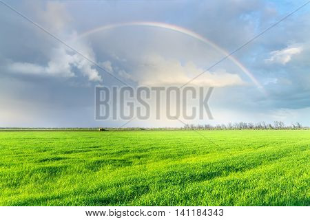 rainbow over the field, early spring fields of Ukraine the beauty of local nature