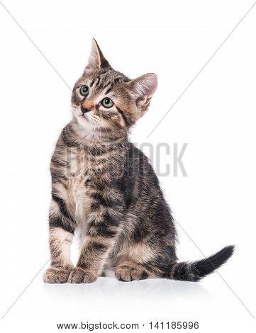 Cute little kitten isolated on white background