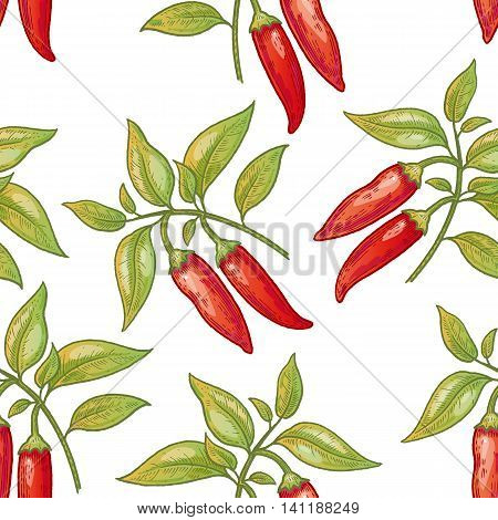 Vector seamless pattern. Bushes of red chili peppers on a white background. Illustration for design packaging paper wallpaper fabrics textiles.
