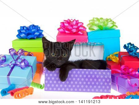 Black kitten with yellow eyes laying in purple polka dot birthday present box ribbons and bows on presents around them isolated on a white background looking to viewers right.
