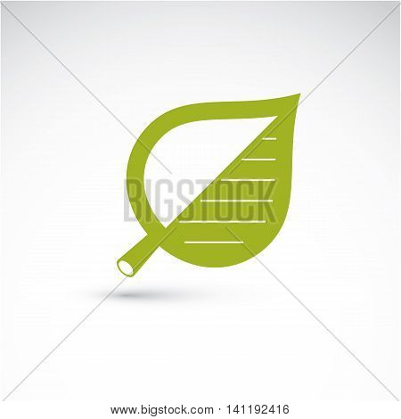 Vector Illustration Of Green Birch Tree Leaf Isolated On White Background. Simple Drawn Nature Desig