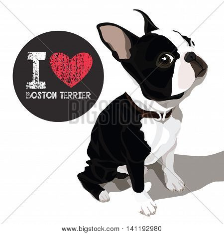 vector closeup portrait of the domestic dog Boston Terrier breed
