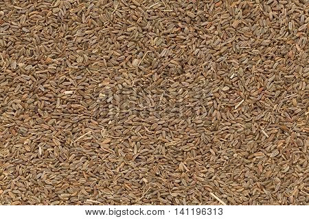 Organic dry Celery or Ajmod (Apium graveolens) seeds. Macro closeup background texture. Top View.