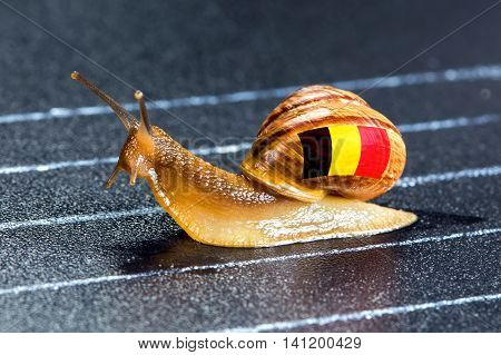 Snail under the flag of Belgium on the sports track moves to the finish line