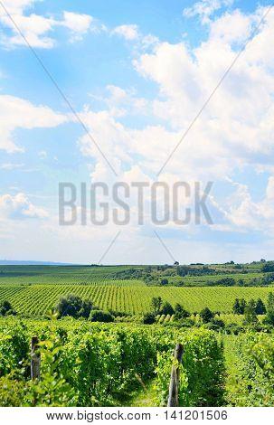 Sobes Moravian Vineyard