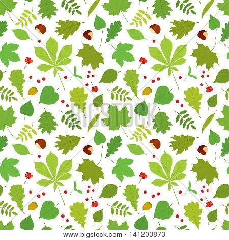 Seamless pattern of different tree leaves - oak, chestnut, birch, Rowan, linden, jasmine, lilac, maple, willow, poplar, sycamore, Rowan berries, acorns, nuts on white background.
