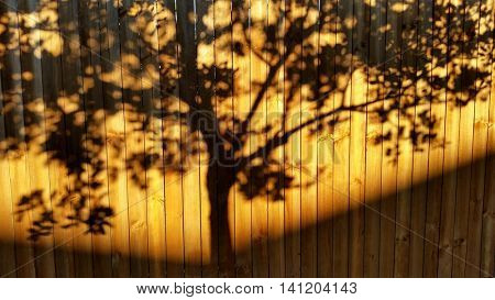 Tree Shadow on Fence at Sunset
