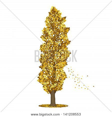 detached tree poplar with yellow leaves on a white background