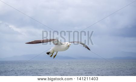 A seagull flying over the ocean on a quiet day.