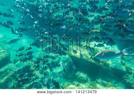 School of fish on the seabed of the popular Similan Islands in Thailand, one of the tourist attraction of the Andaman Sea.
