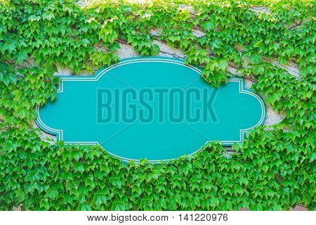 Empty Blue Board With Creeping Plant Green Leaves.