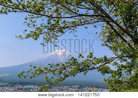 Mt. Fuji In Summer With Green Tree