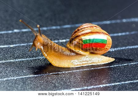 Snail under the flag of Bulgaria on the sports track moves to the finish line