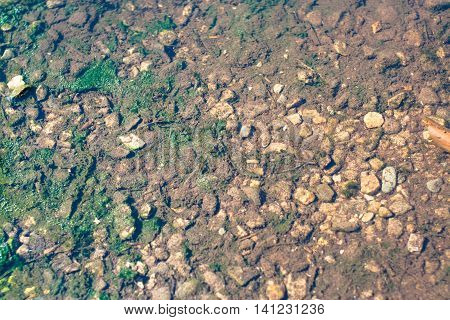 pond bottom with alga and stones abstract texture