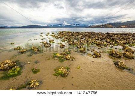 The beach at Dennes Point Bruny Island Tasmania Ausytralia at low tide uncovering the young mussels growing on the rocks.