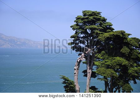 A lone tree standing against the Marin Hills and San Francisco Bay in San Francisco California.