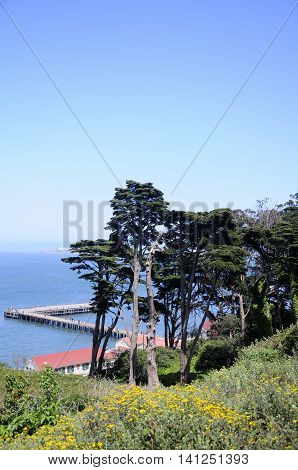 Trees and a dock into San Francisco bay against a blue sky in San Francisco California.