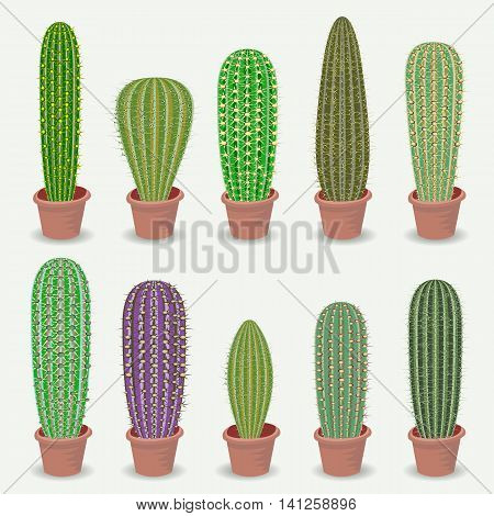 Different types of cactus plants realistic decorative icons set Isolated vector illustration.