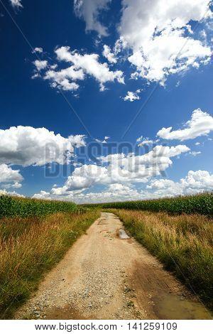 Old Broken Path Between Fields With Corn