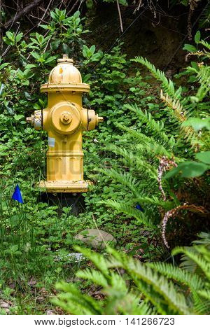 Yellow fire hydrant in the woods, surrounded by vegetation