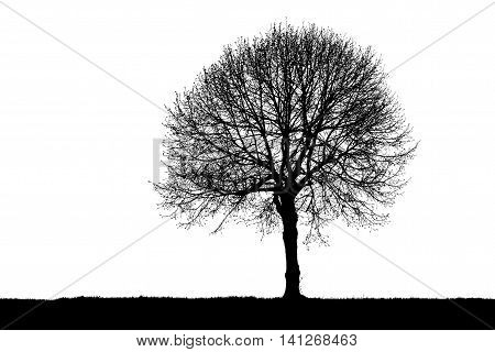 Black and white image of the silhouette of a leafless lonely tree.