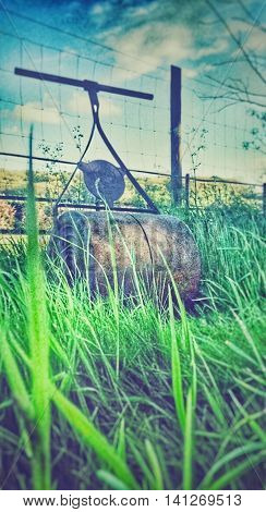 Old fashioned grass roller surrounded by overgrown grass