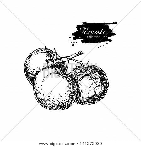 Tomato vector drawing. Isolated tomatoes on branch. Vegetable engraved style illustration. Detailed vegetarian food sketch. Farm market product.