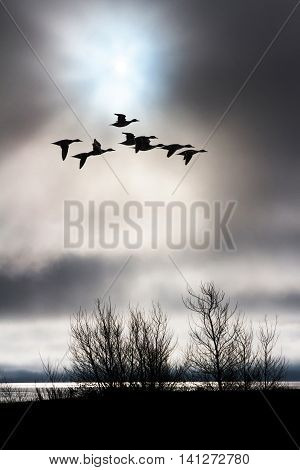 cloudy sky and flying duck nature background